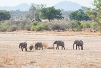 201711_Tanzania_0047.jpg