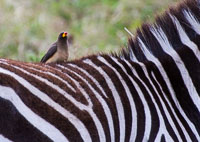 Tanzania_2012_355.jpg