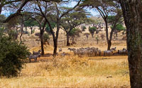 Tanzania_2012_107.jpg