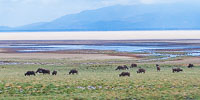 Landscape & Lodges in Northern Tanzania