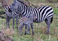 Tanzania_2012_298.jpg